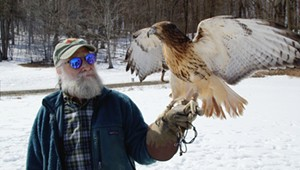 Stuck in Vermont: Wild Ambassador Raptors Educate Visitors at Shelburne Farms