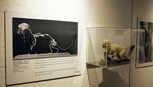 For 2020 Exhibit, the Fairbanks Museum X-Rayed Its Critters