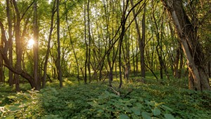 Explore Hidden Wilderness Along the Burlington Wildways