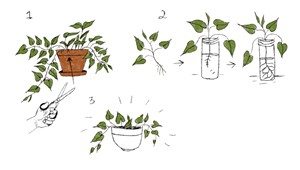 On the Joy of Propagating Plants During a Pandemic