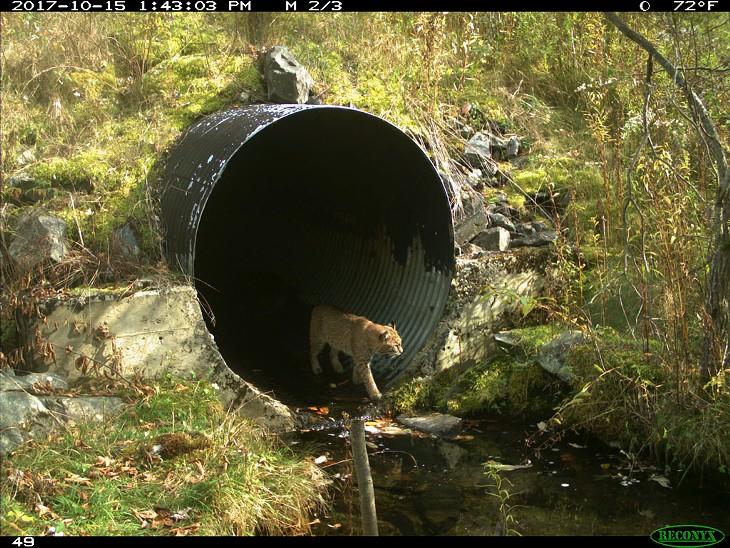 Vermont Wildlife Corridors