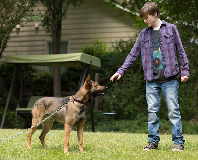 SEMPER FIDO: A boy learns how to be a man from a dog in Yakin's attempt at a canine version of American Sniper.