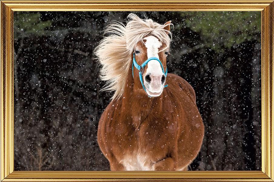 10-pets-horseportrait.jpg