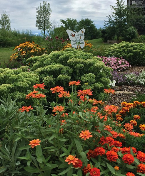 Butterfly Garden at Vermont Garden Park - COURTESY OF BUTTERFLY GARDEN