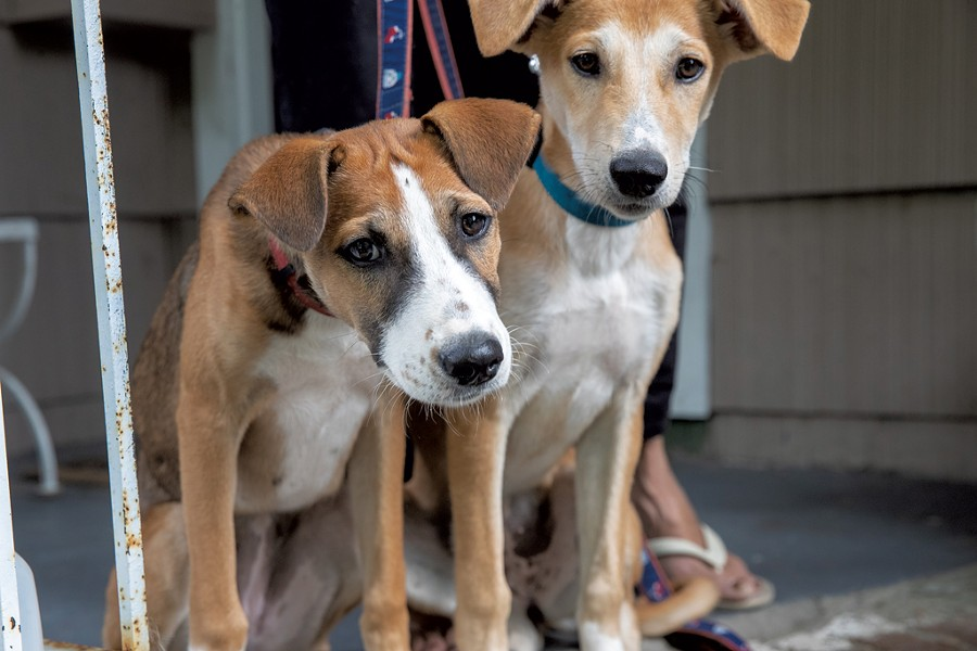 Asha and Zayda, two of the Saudi dogs - JAMES BUCK