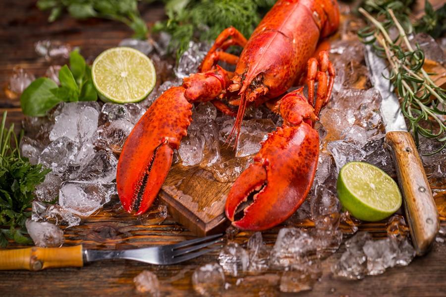 That lobster was high AF - GRAFVISION | DREAMSTIME.COM