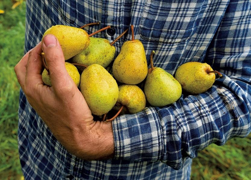 Pears - JEB WALLACE-BRODEUR