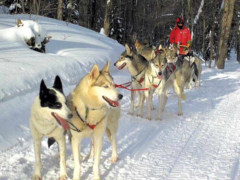 Hinesburg musher Rob Farley with his purebred Siberian huskies - COURTESY OF OCTOBER SIBERIANS