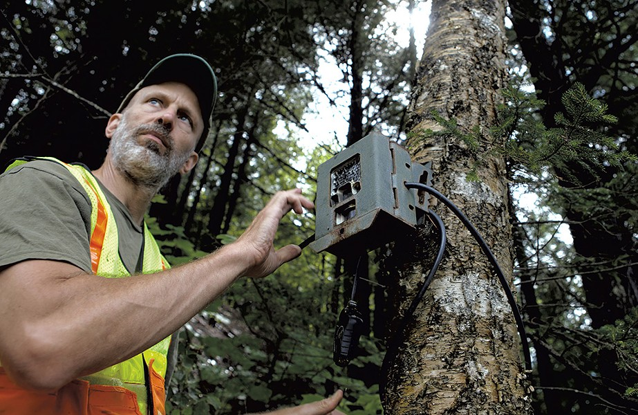 Paul Marangelo checking a wildlife - camera by the Wild Branch in Wolcott - KEVIN MCCALLUM