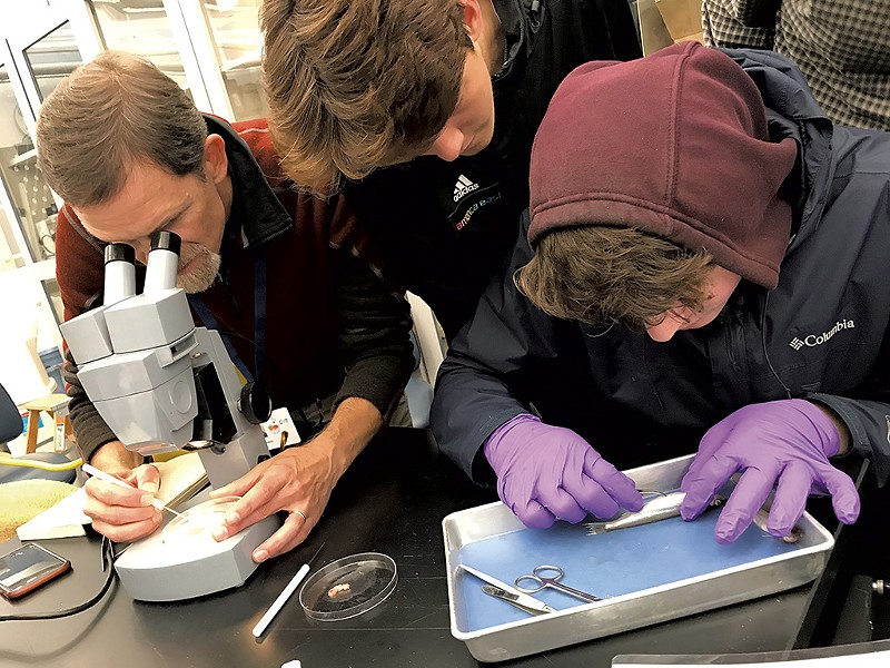 Dissecting smelt at the University of Vermont - COURTESY OF DOV STUCKER