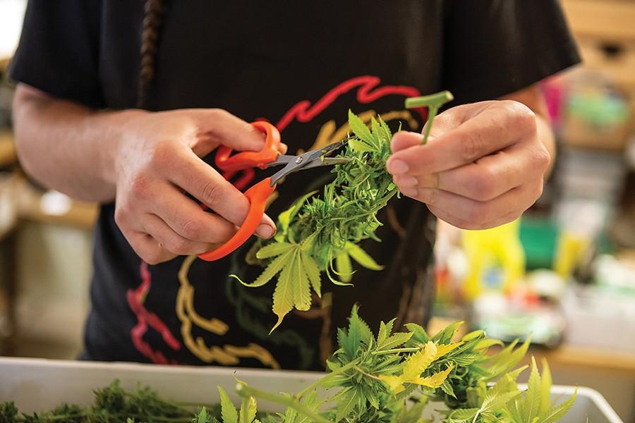 Green State Gardener - LUKE AWTRY