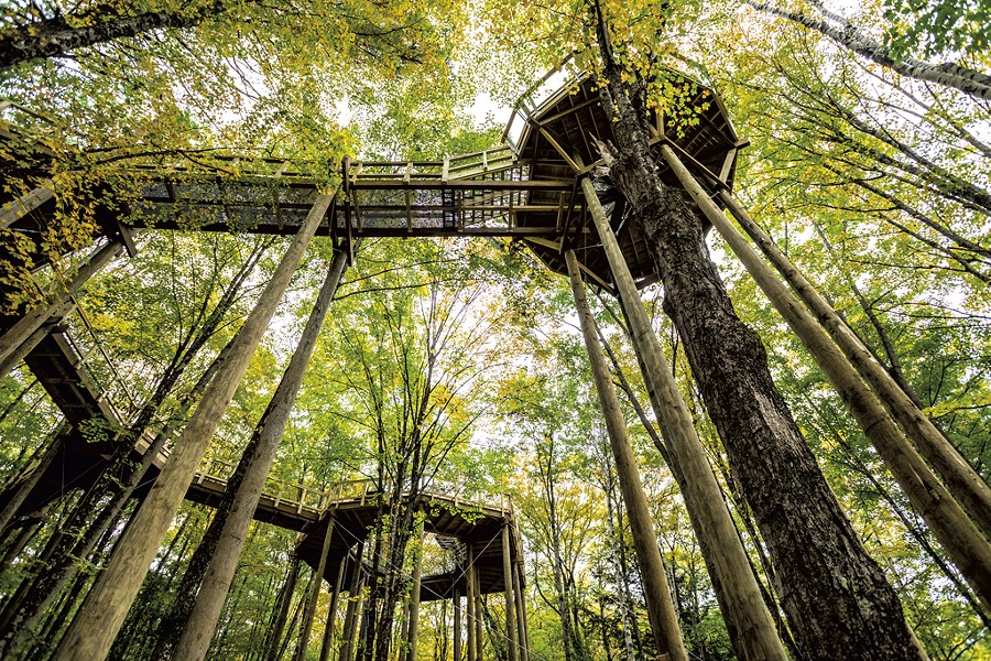 View of the Forest Canopy Walk from the ground - TOM MCNEILL