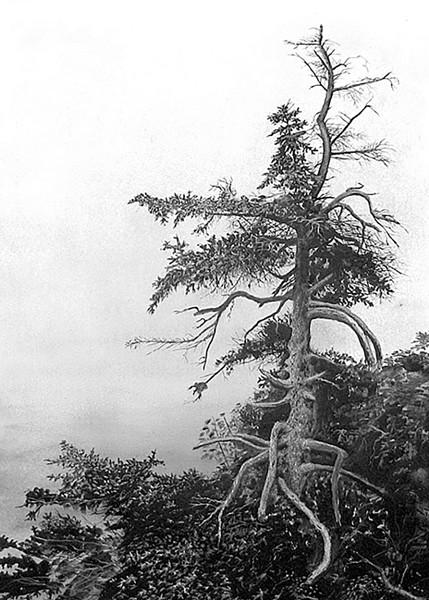 """Acadian Mist"" - GABRIEL TEMPESTA"