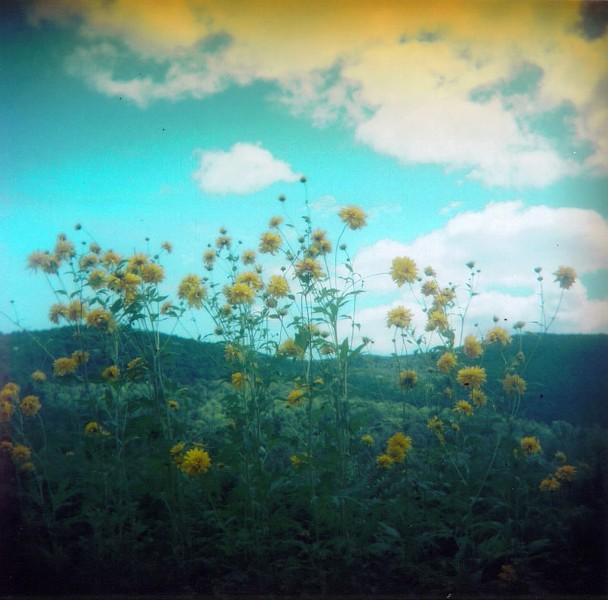 "Alexis Doshas, ""Globeflowers and Blue Skies"""