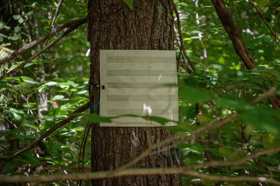 Beethoven Walks installation detail - ZACHARY STEPHENS