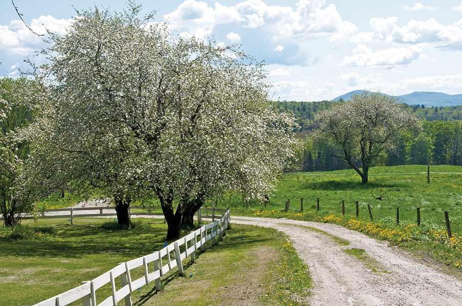 Country road winding through an old apple orchard - © ERIKAMIT | DREAMSTIME.COM