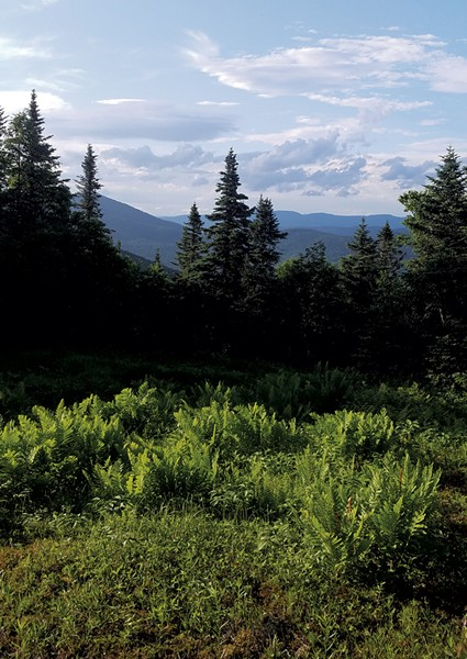 View from a hike on Jay Peak - COURTESY OF HANNAH VICKERY