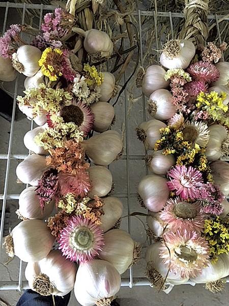 Garlic braids from Last Resort Farm - COURTESY OF OPEN FARM WEEK