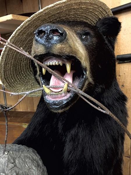 Bear head at Vermont Antique Mall - PAMELA POLSTON ©️ SEVEN DAYS