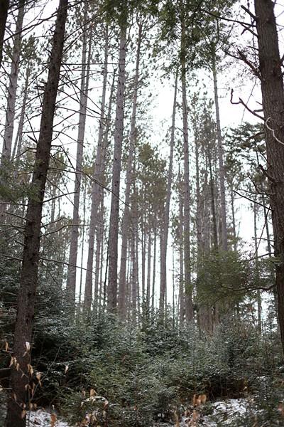 Strafford's Podunk Wildlife Management Area - SARAH PRIESTAP
