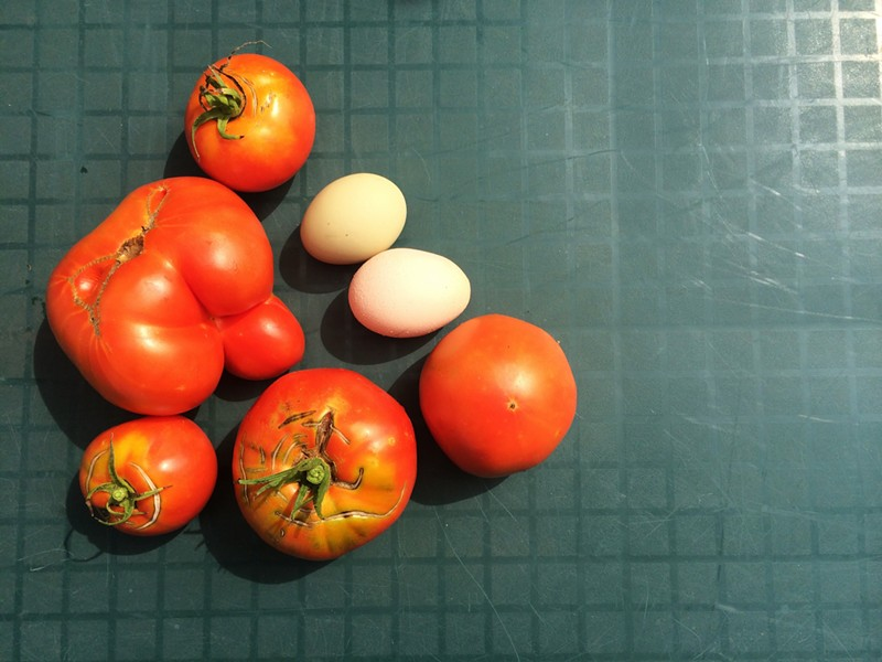 Tomatoes and eggs - JULIA CLANCY