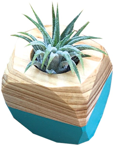 Tiny Air Plant & Holder