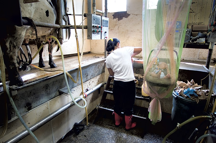 Inside a milking parlor on a Vermont dairy farm - CALEB KENNA/THE GOLDEN CAGE PROJECT/VERMONT FOLKLIFE CENTER