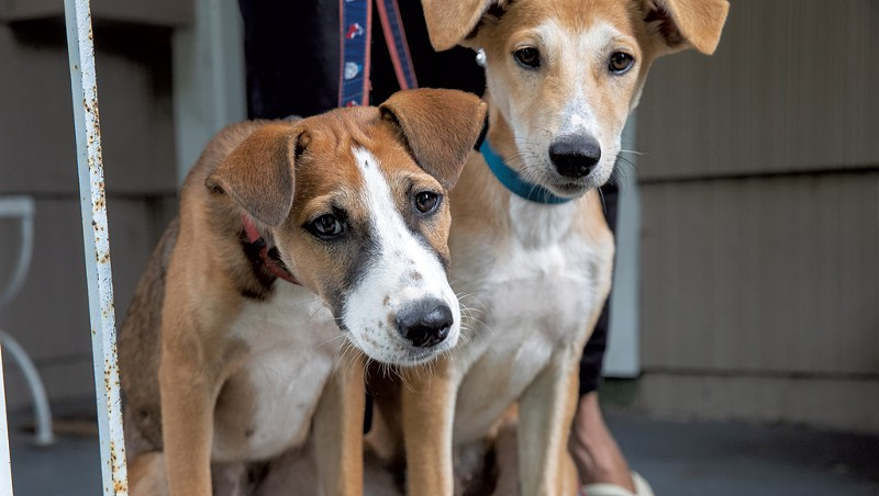 A Vermonter Finds Forever Homes for Desert Dogs From Saudi Arabia