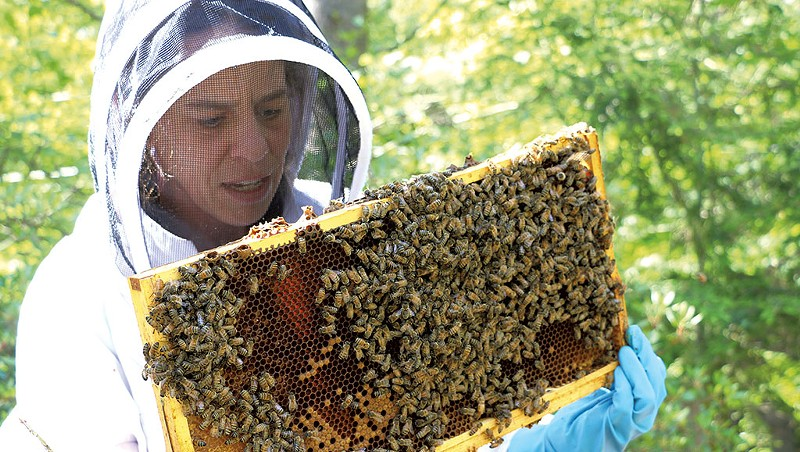 Beekeepers Worry Pesticide-Treated Seeds Contribute to Hive Deaths