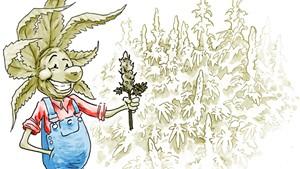 Vermont Senate Sends Marijuana Legalization Bill to Governor