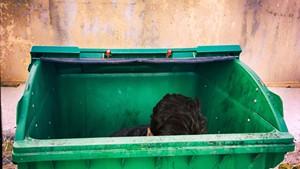 Seriously: Green Mountain Garbage