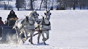 Pat Palmer and his draft horse team at Shelburne Farms