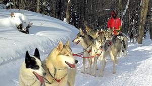 Hinesburg musher Rob Farley with his purebred Siberian huskies