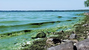 File: blue-green algae on Lake Champlain last year