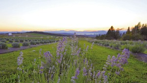 View from Lavender Essentials of Vermont;