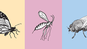 Scientists Aim to Prevent Some Insects, Protect Others