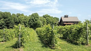 Shelburne Vineyard