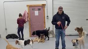 Vermont Dog Trainer