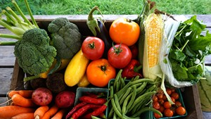 Intervale Community Farm CSA