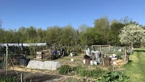 Tommy Thompson Community Garden in Burlington