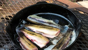Trout cooking in a cast-iron pan