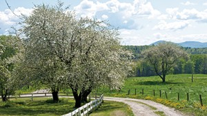Country road winding through an old apple orchard