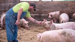 Pig farmer Ethan Gevry in Addison