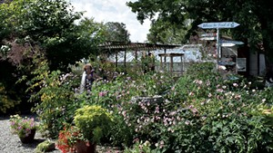 Eileen Schilling watering plants at Horsford Gardens & Nursery