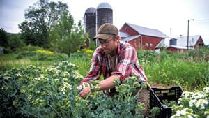 Graham Unangst-Rufenacht harvesting sea kale at the Farm Between of Sterling College in Jeffersonville