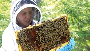 Brooke Decker inspecting a beehive
