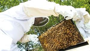 Francois Gasaba moves bees into their new home