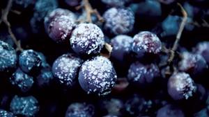 Taste of Place: Vermont Vineyards Press Winter into Wine