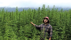Rye Matthews of Vermont Hemp Co. at Quarry Road Farm's hemp field in Middlebury