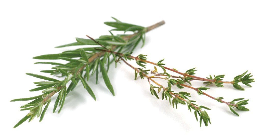 Rosemary and thyme sprigs - DREAMSTIME